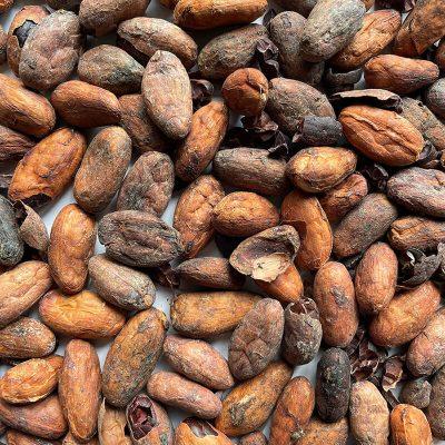Cacao - Entrada