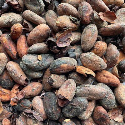 Cacao - Rechazo