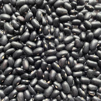 Frijol Negro - Aceptado